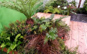 capel manor college tropical plants tree ferns small garden design 300x188 - capel-manor-college-tropical-plants-tree-ferns-small-garden-design